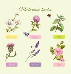 Medicinal herbs set vector
