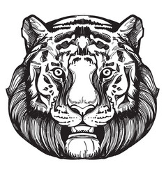 Muzzle of a tiger for creating sketches of vector