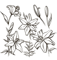 Set of linear flowers and buds vector