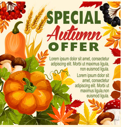 autumn sale fall season special offer poster vector image