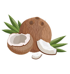 cartoon coconut fresh vitamin fruit juicy sliced vector image
