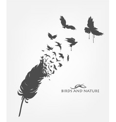 Feathers with flying flock birds vector