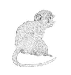 Hand drawn sitting monkey Sketch style vector