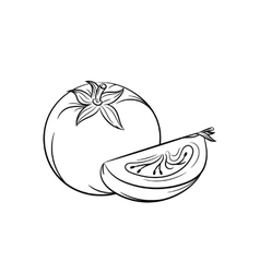 Hand drawn tomato sketches on white background vector image vector image
