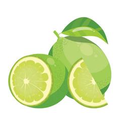 cartoon lime fresh vitamin fruit juicy citrus vector image
