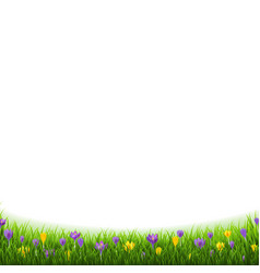 Crocus flowers border with grass vector