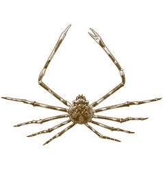 Engraving japanese spider crab vector