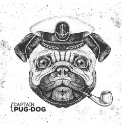Hipster animal pug dog captains cap and pipe vector