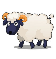 Little cute farm animal sheep stands isolated vector