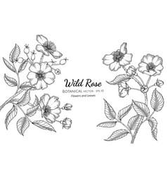 Wild rose flower and leaf hand drawn botanical vector
