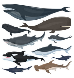 whales dolphins sharks and other nautical mammals vector image