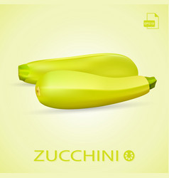 Set of fresh ripe zucchini isolated on a vector