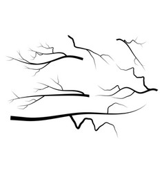 bare branch set symbol icon design vector image