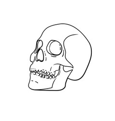 black and white skull isolated on background vector image
