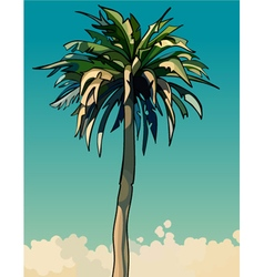 Cartoon drawn tall sprawling decorative palm tree vector