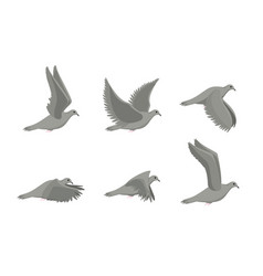 Cartoon grey flying dove bird sideways set vector