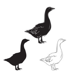 hand drawn goose set vector image