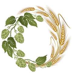 Hops and wheat botanical vector