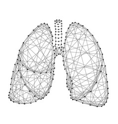 lungs human organ of respiration from abstract vector image
