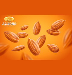 almond set detailed realistic kernels vector image