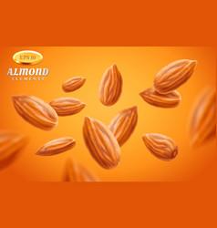 Almond set detailed realistic kernels vector