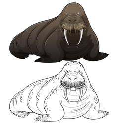 Animal outline for walrus vector
