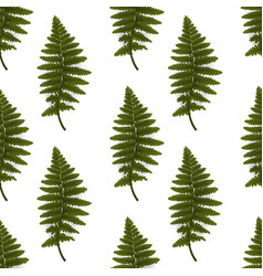 colorful green twig fern vector image