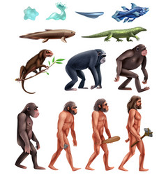 Darwin evolution icon set vector