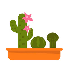 Different potted cacti vector