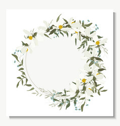 hand drawn green eucalyptus fern chamomile cosmey vector image