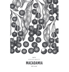 Hand drawn macadamia branch and kernels design vector