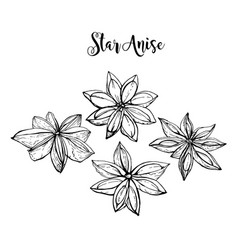 Hand drawn star anise vector