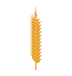 Healthy wheat food icon isometric style vector