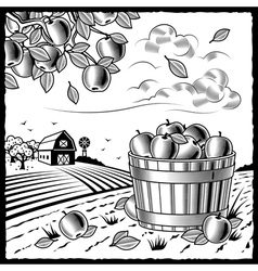 Landscape with apple harvest black and white vector image
