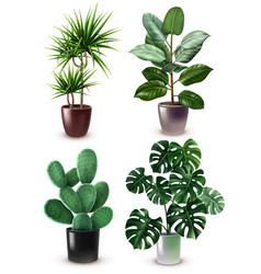 realistic houseplant icon set vector image