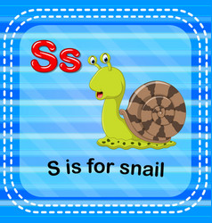 Flashcard letter s is for snail vector
