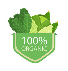 organic 100 cabbage lettuce vector image