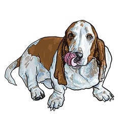 basset hound dog sitting and stick out its tongue vector image