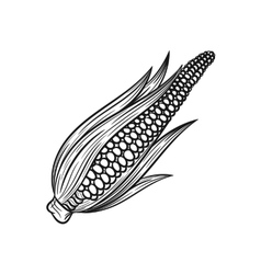 Hand drawn corn sketches on white background vector image vector image