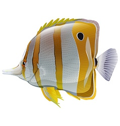 A big fish vector