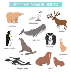 arctic and antarctic animals set vector image