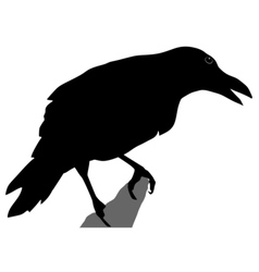 Black silhouette of crow vector