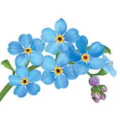 Bunch of blue forget me not flowers with leaves vector