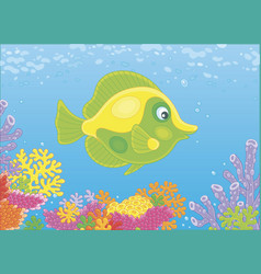 Butterfly fish on a reef vector