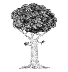 cartoon drawing broadleaved tree vector image