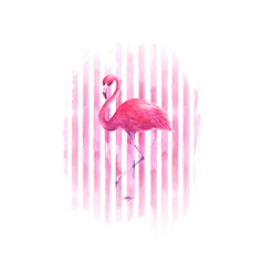 Flamingo on watercolor pink striped background vector