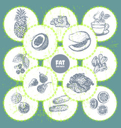 Ink hand drawn fat burners fruits and veggies vector