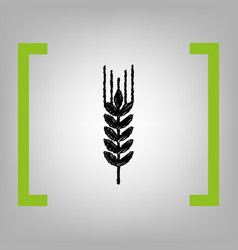 wheat sign spike spica vector image