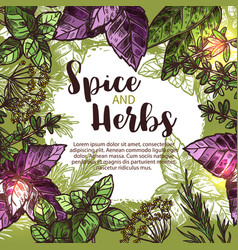 spice and herb poster with frame of fresh plant vector image