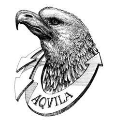 Eagle head sketch vector image